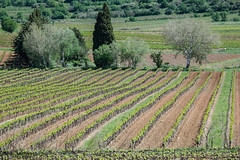 comme en Toscane (mimu_13) Tags: samsungnx nx500 provencealpescotedazur provence vigne