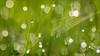 Geometrie einer Wiese (tzim76) Tags: grün wiese gras morgentau tau spinnennetz flares tropfen natur nature outdoor sun
