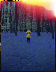 everyone's happy (steve-jack) Tags: sinar p 210mm fuji npl 160 t film 4x5 5x4 large format bluebells blue tungsten woods stevenage nature wild flowers tetenal c41 kit epson v500 forest