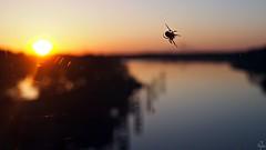 Sunset spider (Oczyma Duszy) Tags: zachód zachódsłońca słońce niebo odra rzeka woda krajobraz most mostmilenijny mostrędziński panorama olympusepl5 mzuikodigital sunset sun sky skyporn oder river water waterscape landscape bridge