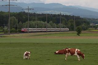 SBB Lokomotive Re 460 unterwegs zwischen Gümligen und Rubigen bei Bern im Kanton Bern der Schweiz