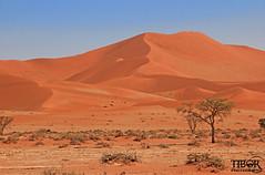 Sossusvlei (morbidtibor) Tags: africa namibia desert dunes sossus sossusvlei deadvlei