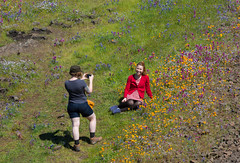 815A1820 Bed of Muli-Field of colored Flowers (hobbitcamera) Tags: northtablemountainecologicalreserve tabletopmountain northtablemountainecologicalreservetabletopmountain oroville orovillecalifornia wildflowers flowers hiking colorfulflowers buttecounty tabletopmtn bedofflowers