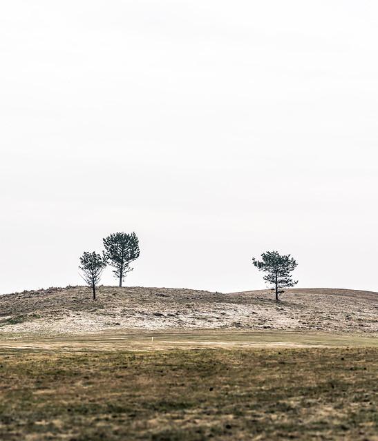 Three loners on a field
