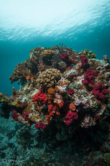 2018 fiji, 11 april, jerry's jelly a myriad of soft corals