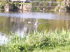 New Pictures 061 (lesleydooley136) Tags: newpictures