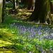 Wintergreen Wood in Spring