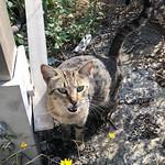 Marramiau! #gatos #gatoscallejeros #cats #photocats #instacats #neko #meow #gatze #gatto #koshka #catsofworld #catsofinstagram #streetcats #chat thumbnail