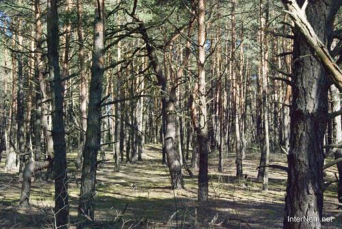 Волинський ліс InterNetri Ukraine 0386684292