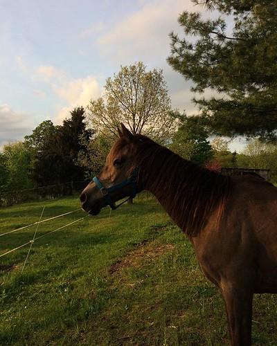 Pretty girl at Sundown #horse #pony #spring #goldenlight #newhome #amityfarmbatik
