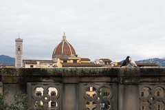 Turtle Doves (martinstelbrink) Tags: toskana toscana tuscany italy italien italia florenz florence duomo dom cathedral uffici uffizien doves tauben sony alpha7rii a7rii zeissloxia25mmf24 loxia2425 zeiss carlzeiss loxia 25mm f24 ze firenze