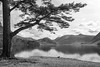 Mature Scots Pine on the edge of Crummock Water (Pexpix) Tags: scotspine landscape pine serene lakedistrict nationalpark cumbria 攝影發燒友 lake fir film crummockwater trees lanthwaite blackandwhite nationaltrust lph sky scenic reflection water clouds mountain bw monochrome buttermere england unitedkingdom gb