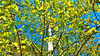 Spring Aspen (obscure.atmosphere) Tags: frühling spring primavera printemps 春 봄 deutschland germany hamburg sonnenschein sonnenlicht licht light ligero lumiere 光 빛 sunlight sunshine 日 태양 sunny sonnig natur nature naturista naturaleza 自然 자연 wald forest bosque selva foret 森林 숲 woods blätter leaves baum bäume tree trees plants pflanzen atmosphere atmospheric atmosphäre atmosphärisch exposure himmel heaven sky cielo cieux 天 하늘 dream traum fresh frisch nice schön sun sonne air luft green blue blau grün birke birch grass gras