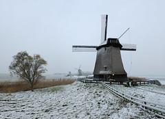 Snow in November (Julysha) Tags: snow 2008 november thenetherlands noordholland autumn schermer d200 cnx2 dutch mills tokina12244