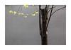 Renaissance (hélène chantemerle) Tags: mur arbre branche feuilles lumière printemps wall tree branch leaves light spring