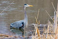 IMG_5033 (nitinpatel2) Tags: bird nature nitinpatel