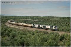 Torreblascopedro. (pazalberto269) Tags: al andalus lujo hotel trainspotting tracks trainspotter españa jaen olivos nikon diésel directo d5300 renfe 319 integria amazing amanecer