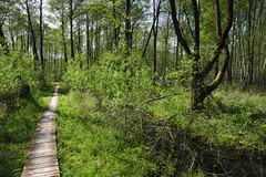 IMGP14153 (Łukasz Z.) Tags: zauczenowe lubelskie rzeczpospolitapolska poleskiparknarodowy nationalpark sigma1750mmf28exdchsm pentaxk3
