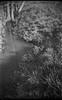 meadow, creek, tree trunks, reflections, Biltmore Estate, Asheville, NC, Argus A3 50mm f-4, Kodak TMAX 400, Ilford Ilfosol 3 developer, 2.27.18 (steve aimone) Tags: reflections meadow creek treetrunks grasses biltmore biltmoreestate asheville northcarolina argus argusa3 argusa350mmf4 kodaktmax400 ilfordilfosol3developer 35mm 35mmfilm film blackandwhite monochrome monochromatic