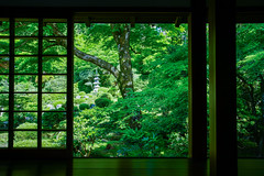 Sanzen-in Temple (peaceful-jp-scenery (busy)) Tags: sanzenin temple kyoto 三千院 大原 京都 日本 聚碧園 sony α99ⅱ a99m2 ilca99m2 amount sigma24105mmf4dg ohara