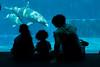 DSC00508 (Ni.Ca.) Tags: acquariodigenova famiglia vacanza delfino