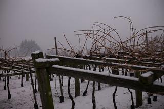 Mountain Life - Sleeping Vineyard