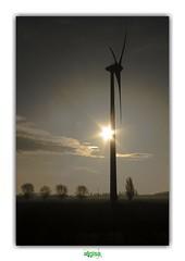 NO MOVEMENT, NO COLORS, JUST SILENCE (régisa) Tags: lever soleil sunrise éolienne belgie belgique westvlaanderen flandre occidentale tree arbre sun wind turbine energy neworder