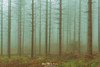 Instagram woods (Mimadeo) Tags: forest tree trees bark bare winter autumn log logs trunk trunks deciduous conifer coniferous landscape fog foggy mist misty morning bright nature natural scene pine pines wood woods vintage retro old filter effect instagram toned decidious