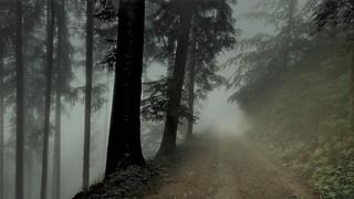 Mein Wanderweg von Schönmünzach zur