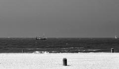 f1342 (lo.tra) Tags: gulls fishing lotra