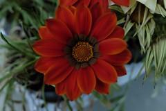 Flowers Design (Hive Bee) Tags: flower flowers fiore fiori garden mygarden fujifilm fujinon fuji naturalmente