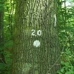 Tree 2.0 thumbnail