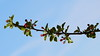 Branch (G3nie) Tags: branch red flowers sprout bloom tree sky nature growth leaves canon 1100d