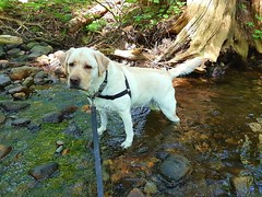 """Gracie emerging from the creek • <a style=""""font-size:0.8em;"""" href=""""http://www.flickr.com/photos/14904436@N00/41366799925/"""" target=""""_blank"""">View on Flickr</a>"""