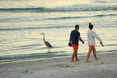 morning activities (mindSnax) Tags: florida gulfofmexico northredingtonbeach beach bird heron walking fishing