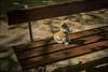 haben MICH MEINE Butler allein gelassen? (WolfiWolf-presents-WolfiWolf) Tags: wolfiwolf woasneetreecht wolfi residenzpark würzburg waiting bench habenmichmeinebutleralleingelassen stüben schatten sitzen sitzenbleiben blau blue allein immerallein wo wer diewürfelsindgefallen wurst wirken butler butlers blueeyes eneamaemü universe kleinewolfis weinen wüst bank pullern pupsi möchtestdumichheiraten diagonal shadow derexplorierendste