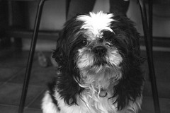 gizmonb (YassChaf) Tags: dog dogs chien clebs animaux animauxdecompagnie animal toutou