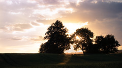 Sommerabend (Lukas Litz Obb) Tags: evening landscape sun 1zoll 1169abendabendlichtde deutschlandeuropafeldformatgegenlichthimmellandschaftlichtneuwiedoberbieberrx 100 iv rx100 rx100iv rheinlandpfalz sonne sonnenuntergang sony umwelt nr nwd obb c 20062013 401 tags
