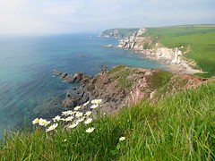 Daisy Cliffs! ('cosmicgirl1960' NEW CANON CAMERA) Tags: devon coast path coastal seaside cliffs flowers worldflowers nature geology ayrmercove green grass blue sky sea water clouds yabbadabbadoo