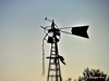 Lonely Perch_186161 (rjmonner) Tags: windmill windmillwednesday rural tattered neglected bird iowa madisoncounty silhouette blades hang trail trailing hanging torn relic country farm farming waterpump