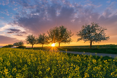 Frühling in Nordhessen (highflyer1964) Tags: sonyilce deutschland landscape landschaft sonne himmel frühling ilce7m2 clouds bäume goldenestunde hessen sonyilce7m2 fe1635mmf4zaoss sonyalpha7m2 goldenhour sunset gegenlicht sonnenuntergang spring wolken raps