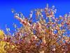 Spring in the City (dimaruss34) Tags: newyork brooklyn dmitriyfomenko image sky spring flowers trees bloom
