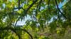 (niiicedave) Tags: 4425littlemauitrail columbiagorge coyotewallhikingarea mounthood washingtonthestate nativeplants
