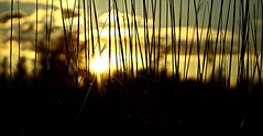 Últimas luces (portalealba) Tags: zaragoza zaragozaparque aragon españa spain sunset sol atardecer canon eos1300d 1001nights 1001nightsmagiccity 1001nightsmagicwindow 1001nightsmagicgarden