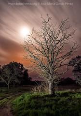 Entrevista (fotochemaorg) Tags: almazán árbol bosque cielo entrevista hierba luna naturaleza noche nocturna nube paisaje periodismoull silueta soria