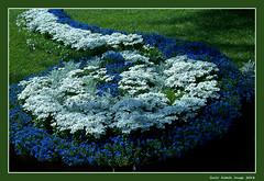 Euroflora - 44 (cienne45) Tags: euroflora euroflora2018 flaralies internationalflowershows parksofnervi nervi genova genoa genovanervi fiori flowers carlonatale cienne45 natale exhibition floralie italy