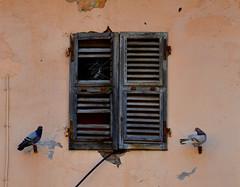 Noi entriamo comunque (Colombaie) Tags: tuscia alto lazio provincia viterbo viterbese gita ponte 1maggio piccioni finestra chiusa abbandonata due simmetria uccelli punte antipiccione buco piazzadelgesù