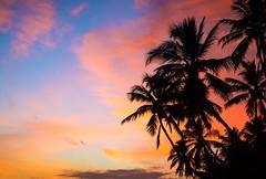Sunset - Sri Lanka (dkphotographs) Tags: srilanka beautiful blue coast landscape longexposure ocean red sea seaside seascape shore trees sun sunset sunlight sunsetoverthesea sundown water clouds evening sky south sonyalpha6000 unawatuna