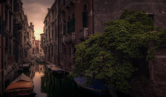 Simplemente Venecia (el_farero) Tags: venecia canal sunset travel street tree ship farero italy cityscape wonderful water windows
