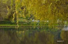 LA GARZA Y EL OTOÑO............ (GABITA1999. THANKS FOR YOUR COMMENT) Tags: new nature naturaleza arbol udc universidad de concepcion chile otoño seasons autumn leaves green